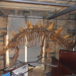 dinosaur-skeleton-natural-history-museum