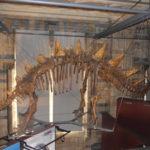 dinosaur-skeleton-natural-history-museum